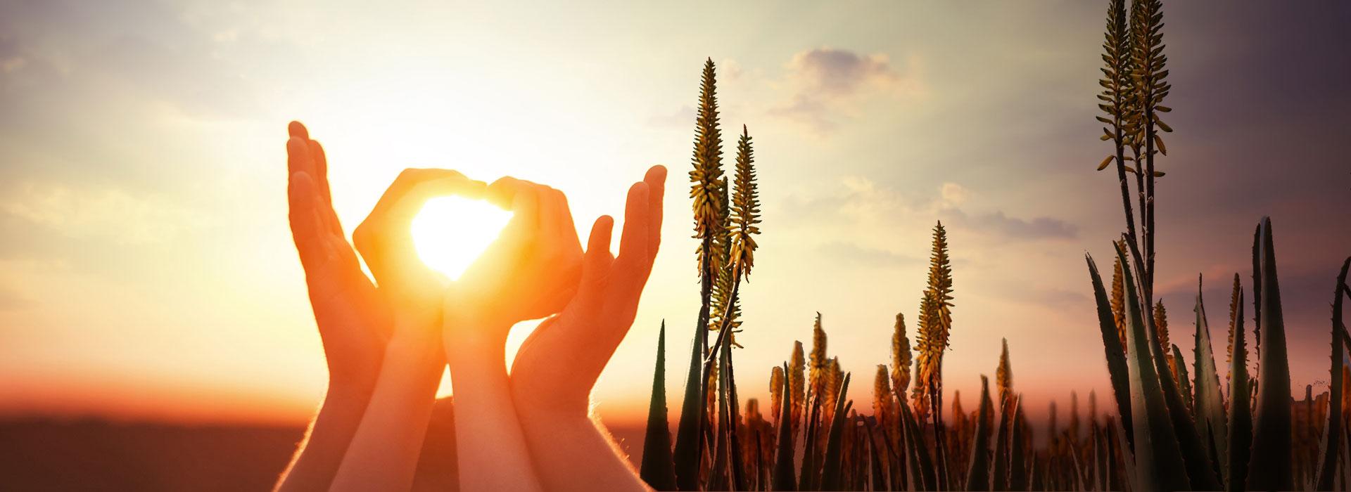 1.000 Sonnentage erhält jede einzelne Forever Aloe.