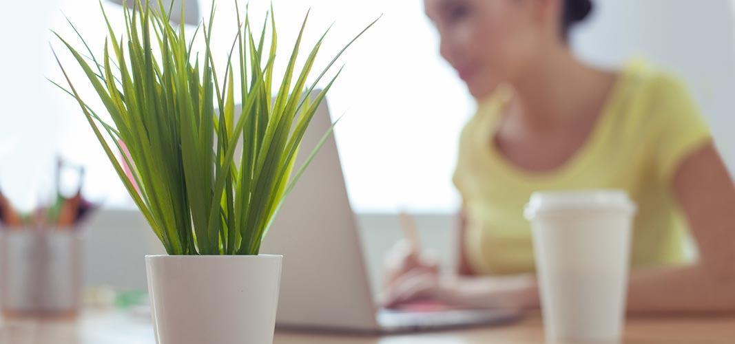 Hol dir grün auf deinen Schreibtisch.